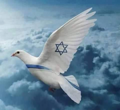 Israel duif met Israelvlag 13592577_962729683840263_1753208170148238816_n